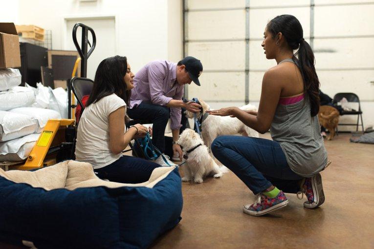 Canine Sidekick Class in Progress